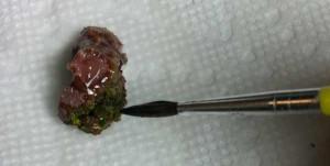 Remove Algae From Blasto Frag