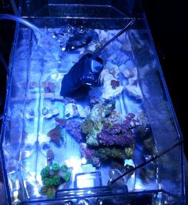 coral frags brita filter