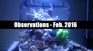 Observations Feb 2016