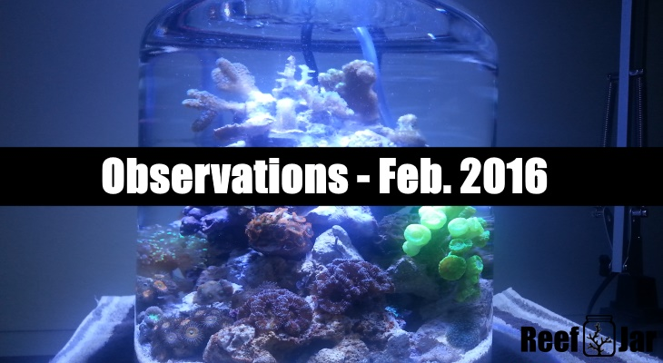 Observations Feb 2016