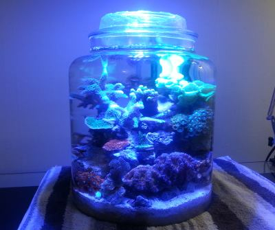 full jar 6 months