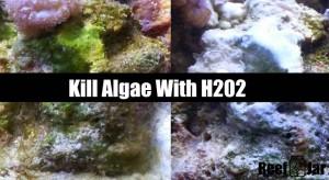 Kill Algae With Hydrogen Peroxide