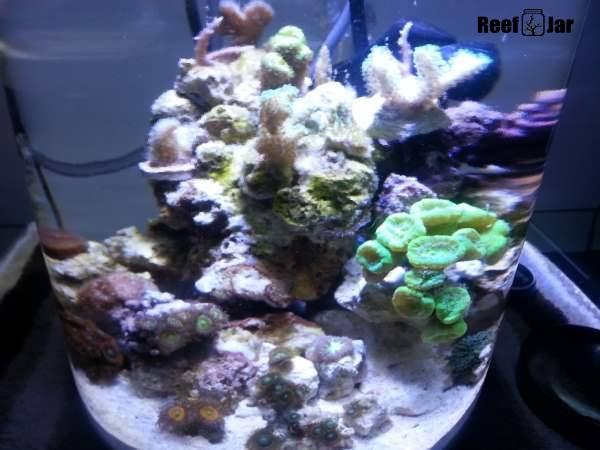 Reef Week 5 And 6