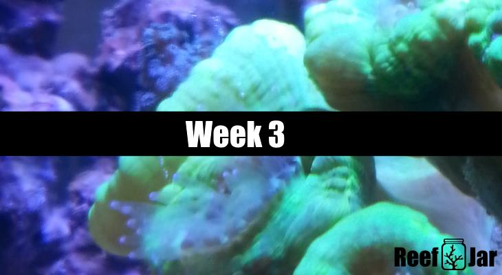 Week 3 Featured Image