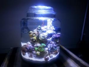 Full Jar Week 4