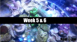 Week 5 and 6 Featured